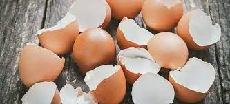 Usefulness of egg shells